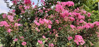 Planta rosada de las flores con el fondo impresionante fotografía de archivo libre de regalías