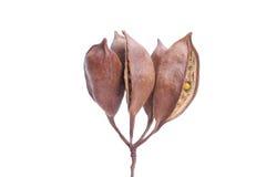 Planta seca Foto de Stock