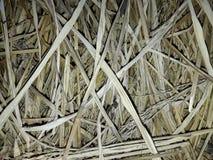 Planta seca del árbol en el tejado fotos de archivo