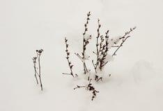 Planta seca del invierno Fotos de archivo