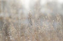 Planta seca sobre fondo del campo fotografía de archivo