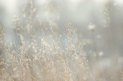 Planta seca sobre fondo del campo foto de archivo