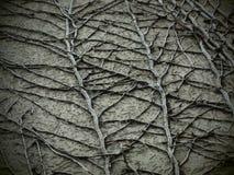 Planta seca texturizada en el cierre de la pared para arriba imagenes de archivo