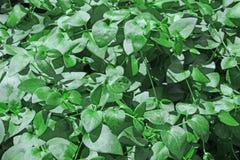 Planta selvagem agradável Imagem de Stock