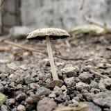 Planta selvagem do cogumelo em Indonésia tomada com delicado disparado macro do espaço da cópia foto de stock