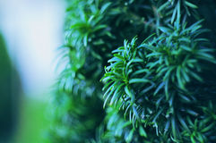A planta shrub fotografia de stock royalty free