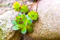 Planta silvestre Fotos de archivo