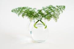 Planta silvestre Fotografía de archivo libre de regalías