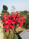 Planta silvestre Imagen de archivo