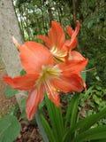 Planta silvestre con la flor hermosa imagen de archivo