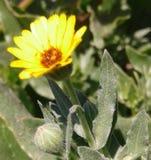 Planta silvestre y flor atractiva imagenes de archivo