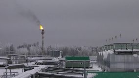 Planta sob a neve no inverno com uma chama do gás vídeos de arquivo