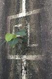 Planta solitária que cresce fora de uma parede Imagem de Stock