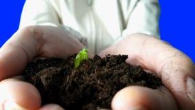 Planta som växer i händer Tid schackningsperiod lager videofilmer