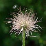 Planta suave Foto de archivo