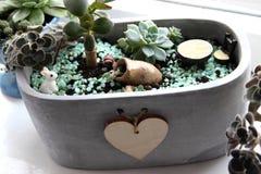 Planta-Succulents interiores en pote Imagen de archivo