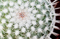 Planta suculenta. Imagen de archivo