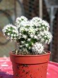 Planta suculenta Imagenes de archivo