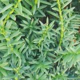 Planta suculenta Foto de archivo