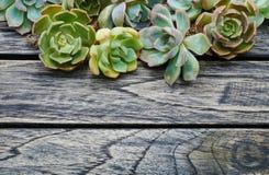 Planta suculenta de la visión superior en fondo de madera Imagenes de archivo