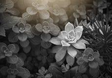 Planta suculenta de los macizos de flores en el jardín Foto de archivo
