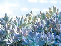 Planta suculenta del cactus en un invernadero del jardín del desierto Fotos de archivo
