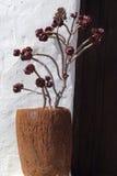 Planta suculenta en un pote. Fuerteventura, islas Canarias. Imágenes de archivo libres de regalías