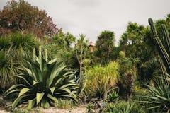 Planta suculenta grande Imagenes de archivo