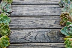 Planta suculento bonito da vista superior com espaço da cópia para o texto no fundo de madeira imagem de stock