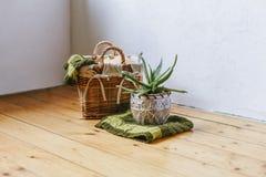 Planta suculento no potenciômetro de argila em um fundo de madeira Abóbora em uma cesta tecida com manta verde Decoração home Roo fotos de stock