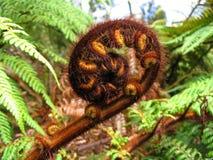 Planta típica de Nueva Zelandia Imagen de archivo