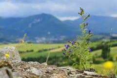 Planta típica y paisaje en Marche Imagen de archivo