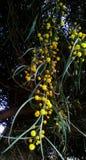Planta tropical Fotos de archivo