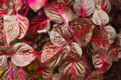 Planta tropical Fotografia de Stock