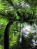 Planta tropical Imagem de Stock Royalty Free