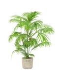 Planta tropical Fotografía de archivo libre de regalías
