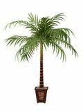 Planta tropical Imagem de Stock