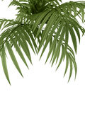 Planta tropical Foto de Stock Royalty Free
