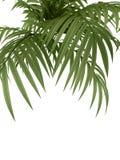 Planta tropical Foto de Stock Royalty Free
