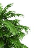 Planta tropical ilustração do vetor