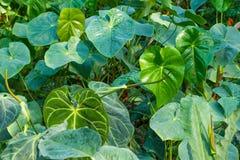Planta tropical Imagenes de archivo