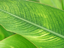 Planta tropical imágenes de archivo libres de regalías