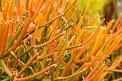 Planta tropical ardiente imagen de archivo