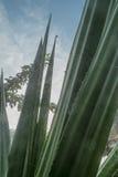 Planta tropical con el web de araña foto de archivo