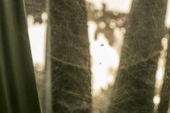 Planta tropical con el web de araña imagen de archivo libre de regalías