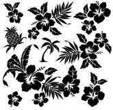 Planta tropical e flor Fotografia de Stock Royalty Free