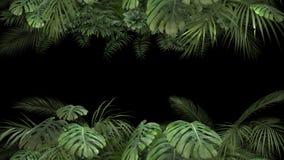Planta tropical en un canal alfa almacen de metraje de vídeo