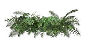 Planta tropical en un fondo blanco metrajes