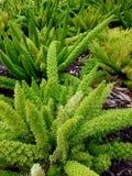 Planta tropical hermosa después de la lluvia ligera 4k Imagen de archivo