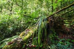 Planta tropical salvaje en la selva tropical cubierta de musgo Tailandia Imagen de archivo